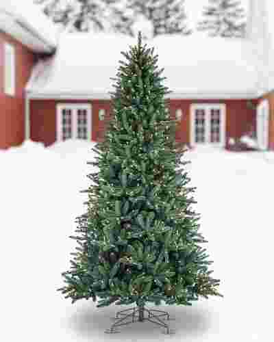 Oakville Outdoor Tree by Balsam Hill SSC 10
