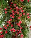 Sugared Berry Forest Wreath by Balsam Hill Closeup 20