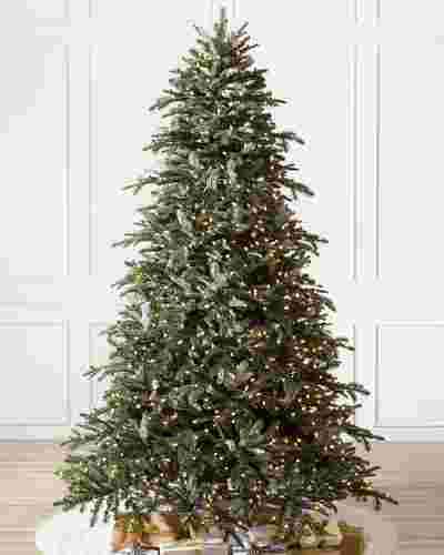 BH Nordmann Fir by Balsam Hill SSC 10