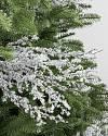 Frozen Branch Picks by Balsam Hill SSC