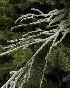 Snowy Branch Picks, Set of 12 by Balsam Hill SSC 10