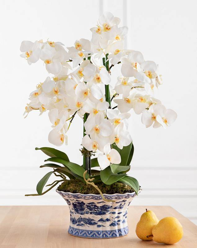 White Phalaenopsis Orchids by Balsam Hill SSC
