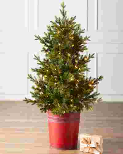 4ft Potted Garden Spruce by Balsam Hill SSC