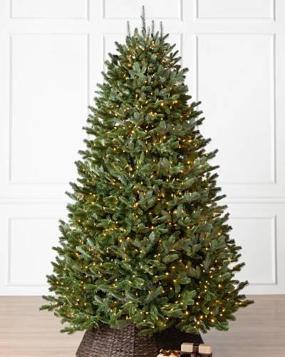 BH Fraser Fir® Tree