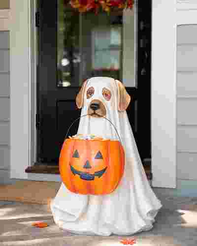 Outdoor Life Size Ghost Dog Candy Bowl by Balsam Hill SSC 10