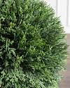 Outdoor Cypress Single Ball Topiary by Balsam Hill Closeup 10