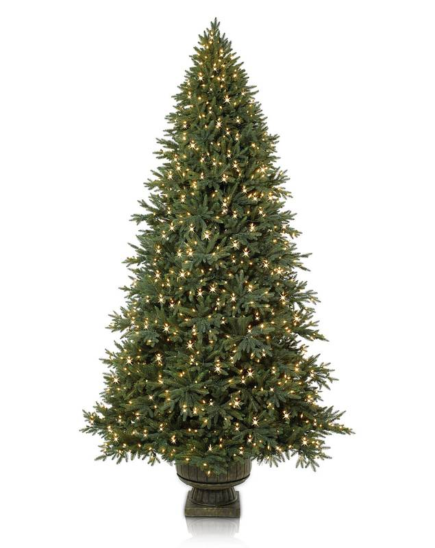 Colorado Mountain Spruce Potted by Balsam Hill SSC 10