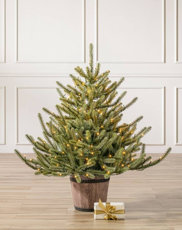 Potted Baby Sanibel Spruce by Balsam Hill SSC