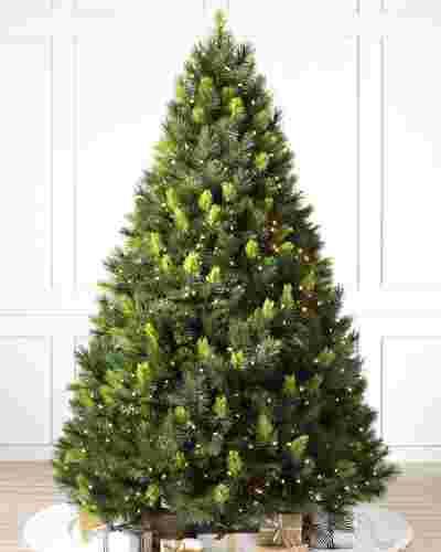 Scotch Pine Tree-1 SSC 10