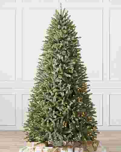 Royal Blue Spruce Main by Balsam Hill